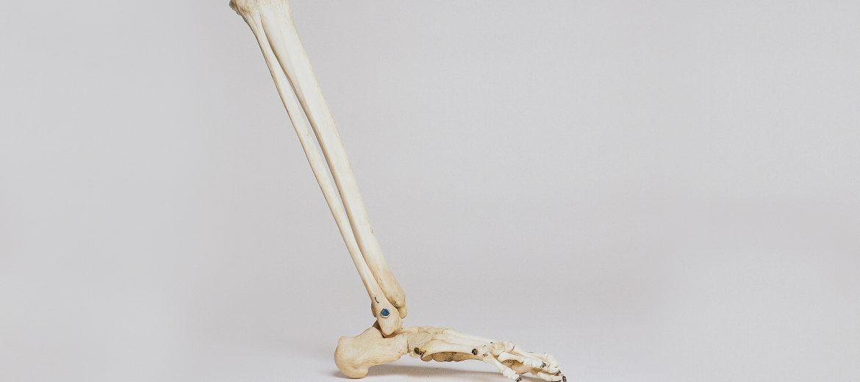foot and lower leg bones